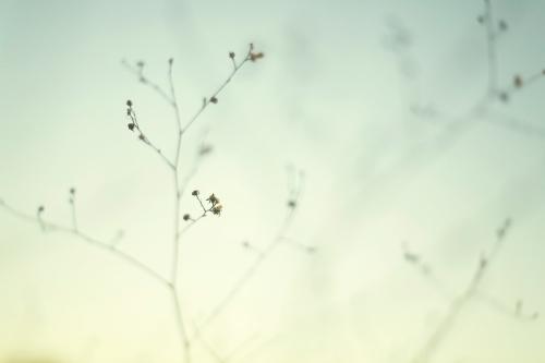 minimalism_by_nerdynotdirty.jpg